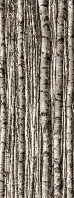 Birch 4*898x598 (898x2398) / 6mm