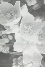 Coll grey 598x898 / 10mm