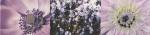 Maxima violet 2 448x100 / 8mm